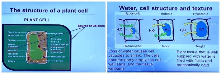 κυτταρική δομή λαχανικών