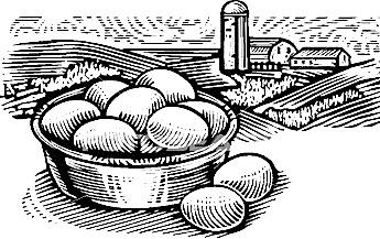 farm-fresh-eggs_~szo0393
