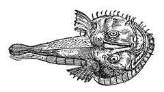 monkfish2