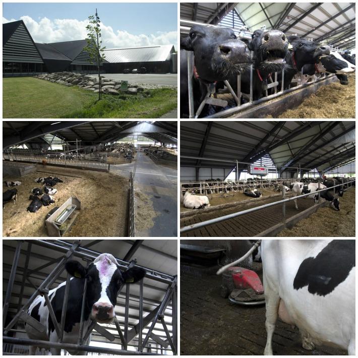 Lurpak farm Dania 2