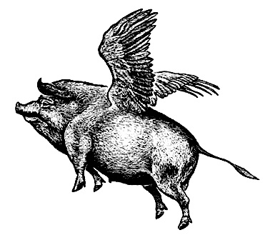 FLYING PIG EDITED