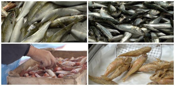 Μυστικά του Ψαριού : γόπα, σαρδέλλα, κουτσομούρα, μπαρμπούνι