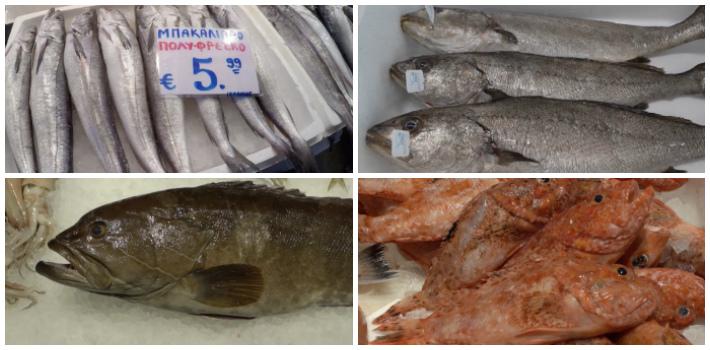 Μυστικά του Ψαριού : μπακαλιάρος, κρανιός, σφυρίδα , σκορπίνα