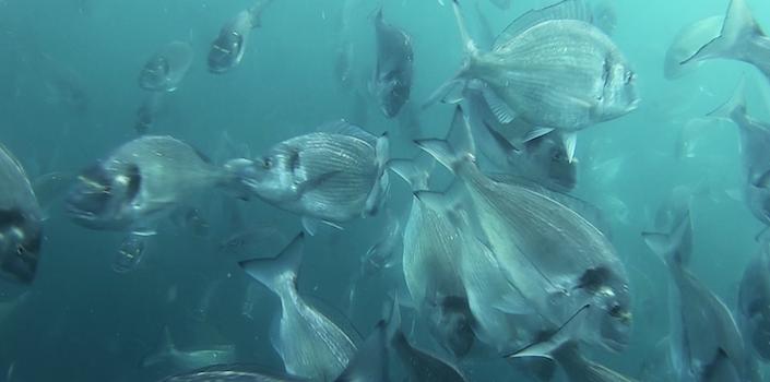 Τα μυστικά του ψαριού -  ιχθυοκαλλιέργεια