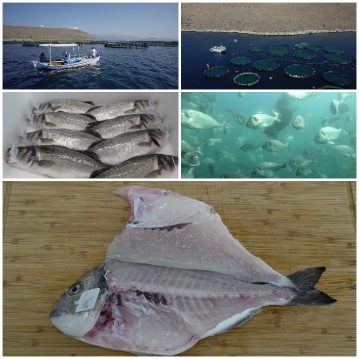 Fish from Greece Mystika Psarioy 4 -3
