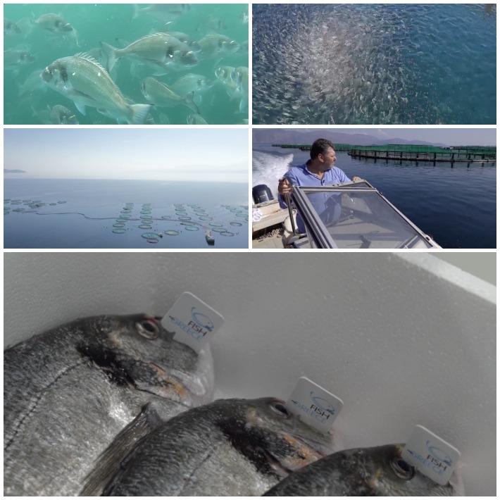 Fish from Greece Mystika psariou 4 -1