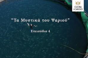 Τα Μυστικά του Ψαριού – Επεισόδιο 4 (video)